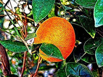 Poster featuring the photograph Fruit - The Orange by Glenn McCarthy Art
