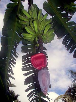 Fruitful Beauty Poster by Karen Wiles