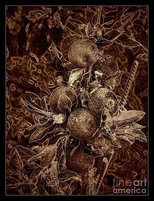 Fruits Of The Loom Poster