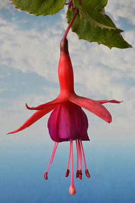 Poster featuring the photograph Fuchsia In The Sky. by Terence Davis