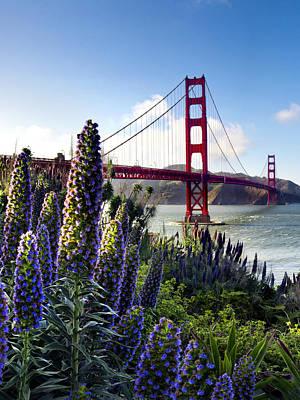 Full Bloom Golden Gate Poster by Sean Davey