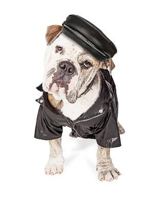 Funny Biker Bad Bulldog Breed Dog Poster by Susan Schmitz