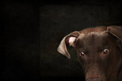 Funny Dog 1 Poster by Heike Hultsch