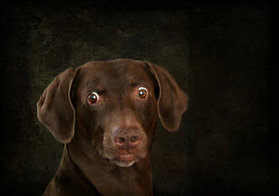 Funny Dog 4 Poster by Heike Hultsch