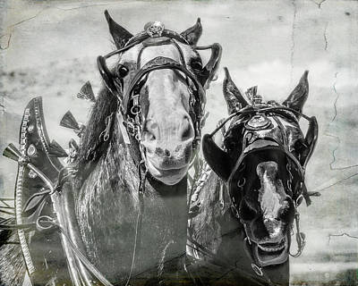 Poster featuring the photograph Funny Draft Horses by Mary Hone