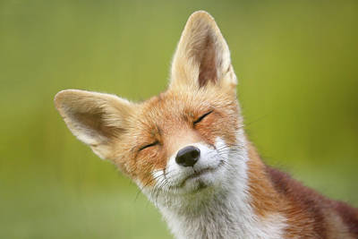 Funny Fox Series _fox Poto Bomb Poster