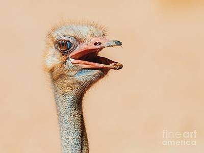 Funny Ostrich Bird Portrait Poster by Radu Bercan