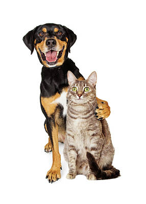 Funny Photo Of Dog With Arm Around Cat Poster
