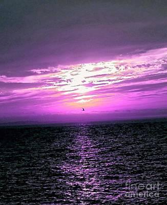 Fuschia Sunset Poster by Christine Chepeleff