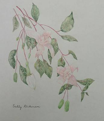 Fushia Poster by Sally Atchinson