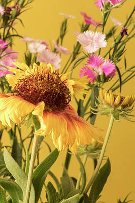 Gaillardia And Dianthus Poster by Richard Rizzo