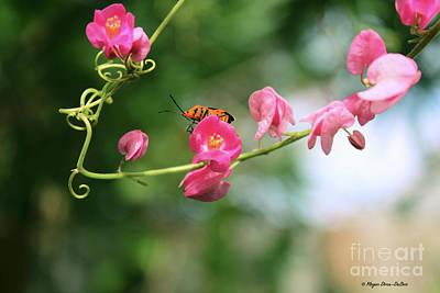 Poster featuring the photograph Garden Bug by Megan Dirsa-DuBois