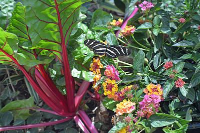 Garden Butterfly Poster