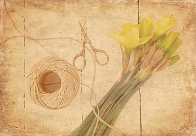 Garden Clippings - Daffodils Poster by Kim Hojnacki