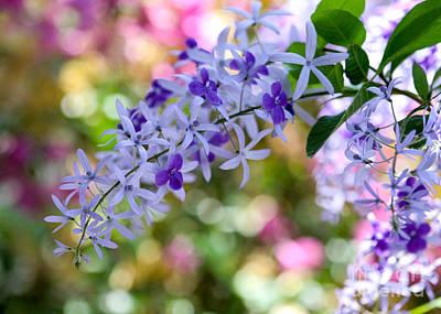 Garden Full Of Colors Poster