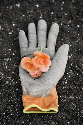 Garden Glove And Flower Blossoms4 Poster