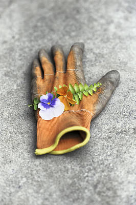Garden Glove And Pansy Blossoms1 Poster