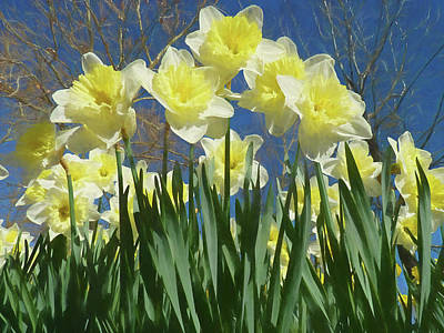 Poster featuring the photograph Garden Of Daffodils by Donna Kennedy