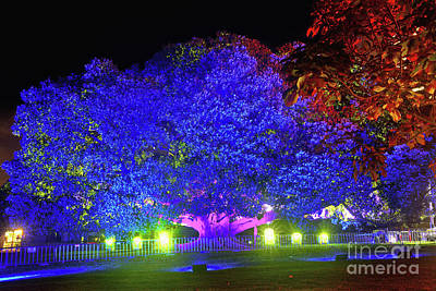Poster featuring the photograph Garden Of Light By Kaye Menner by Kaye Menner