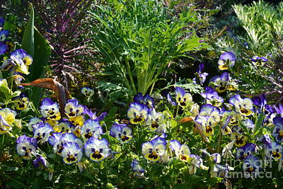 Garden Pansies Poster by Maria Urso