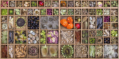 Garden Seed Pods Poster