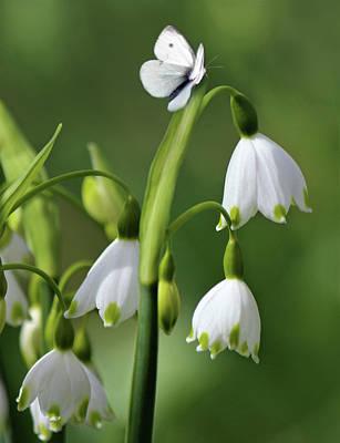 Garden Snowdrops Poster