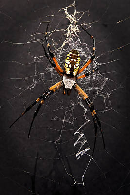 Poster featuring the photograph Garden Spider And Web by Tamyra Ayles