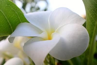 Garden White Poster
