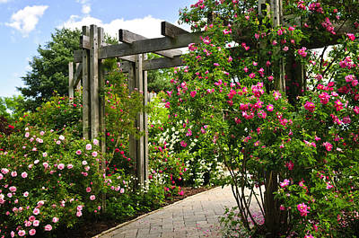 Garden With Roses Poster