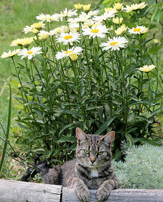 Garfield And Broadway Light Daisies Poster
