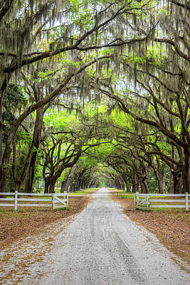 Gated Wormsloe Plantation Poster by Jon Glaser