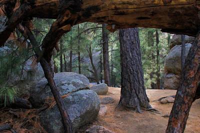 Gateway Of The Fallen Tree Poster by Bonnie Follett