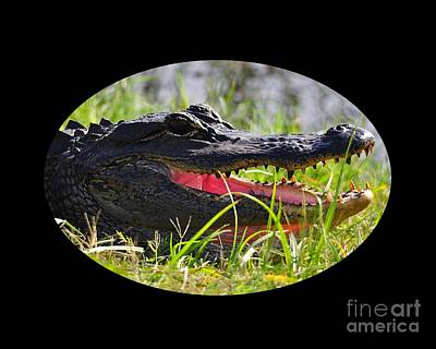 Poster featuring the photograph Gator Grin .png by Al Powell Photography USA