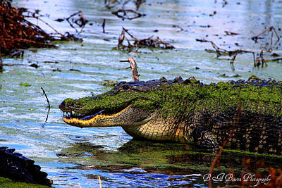 Poster featuring the photograph Gator Growl by Barbara Bowen
