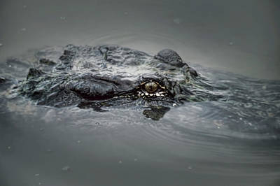 Gator Head  Poster