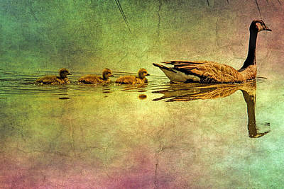 Geese And Babies Textured Poster