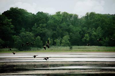 Geese In Flight Poster by Eleanor Bortnick
