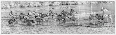 Geese On Frozen Lake Poster