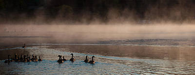 Geese On Old Forge Pond Poster by David Patterson