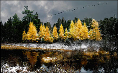 Geese Over Tamarack Poster