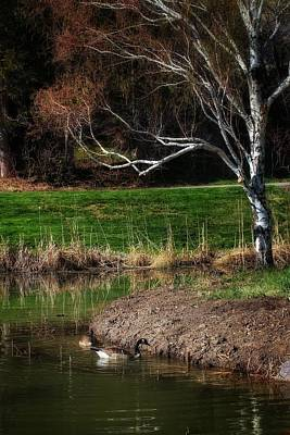 Geese Pool Tree Poster by Buck Buchanan