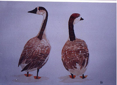 Geese Poster by Rana