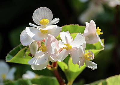 Gentle Bloom Poster
