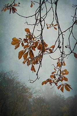 Gentle Fall  Poster by Maggie Terlecki