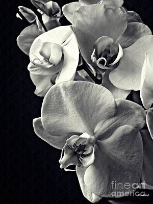 Gentle Silence Monachrome Poster
