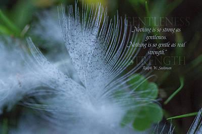 Gentleness 2 Poster