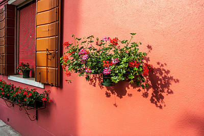 Geranium And Window Poster by Peter Tellone
