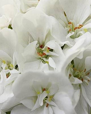 Geranium Wears White Poster