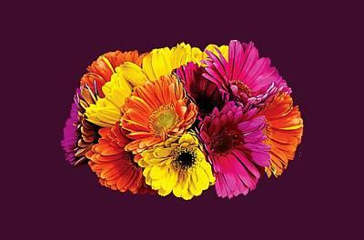 Gerbera Daisies Mixed Colors Poster by Susan Savad