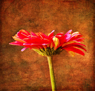 Gerbera Daisy In Fall Poster by Sandi OReilly